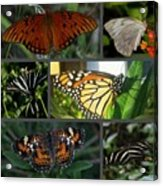 Butterfly Collage 2  Acrylic Print by April Wietrecki Green