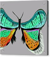 Butterfly Commission Acrylic Print
