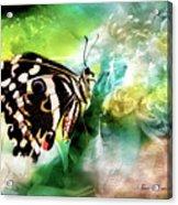 Butterfly Daydream Acrylic Print