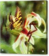 Butterfly Daylily Acrylic Print