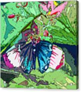 Butterfly Dining Acrylic Print