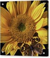 Butterfly Eyes Acrylic Print