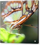 Butterfly Face Acrylic Print