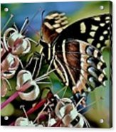Butterfly Fantasy Acrylic Print