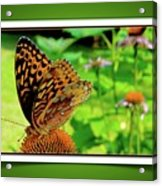 Butterfly For Earth Day Acrylic Print