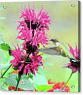 Butterfly Garden 25 Acrylic Print