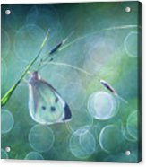 Butterfly Imagination Acrylic Print
