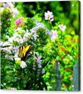 Butterfly In A Garden Acrylic Print