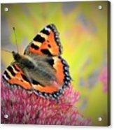 Butterfly In Bloom Acrylic Print