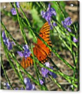 Butterfly In Blue Acrylic Print