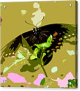 Butterfly In Color Acrylic Print