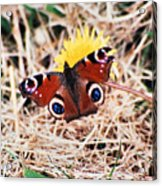 Butterfly In Ireland Acrylic Print