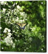 Butterfly In Muted Green Background Acrylic Print