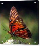 Butterfly In Orton Acrylic Print