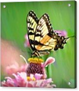 Butterfly In Summer Acrylic Print