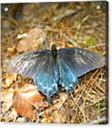 Butterfly In The Forest Acrylic Print