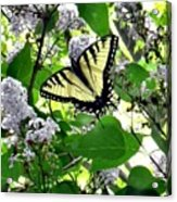 Butterfly In The Lilac No. 1 Acrylic Print