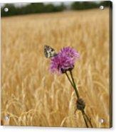 Butterfly In Wheat Field Acrylic Print