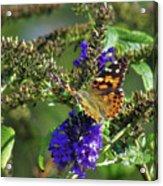 Butterfly Joy Acrylic Print
