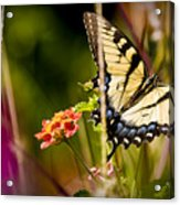 Butterfly Jungle Acrylic Print