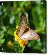 Butterfly Land Acrylic Print