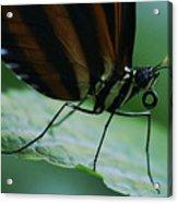 Butterfly Leaf Acrylic Print