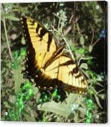 Butterfly Magic Acrylic Print