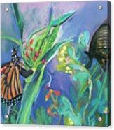 Butterfly Mammas Acrylic Print