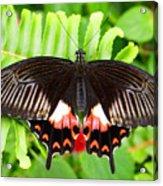 Butterfly Maze Acrylic Print