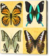 Four Butterfly Montage Acrylic Print