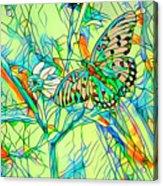 Butterfly Mosiac Acrylic Print