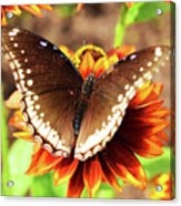 Butterfly On A Sunset Acrylic Print
