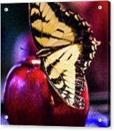Butterfly On Apple Acrylic Print