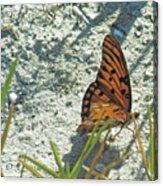 Butterfly On Beach Acrylic Print