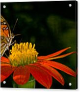 Butterfly On Blossom Acrylic Print