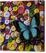 Butterfly On Buttons Acrylic Print