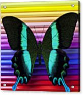 Butterfly On Colored Pencils Acrylic Print