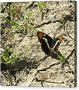 Butterfly On Cracked Ground Acrylic Print