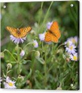 Butterfly On Fleabane #2 Acrylic Print