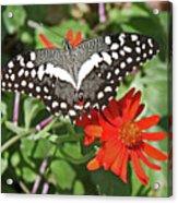 Butterfly On Flower Acrylic Print