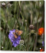 Butterfly On Flower. Acrylic Print