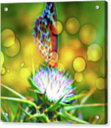 Butterfly On Flower Acrylic Print