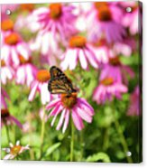 Butterfly On Flowers Acrylic Print