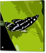 Butterfly On Green Acrylic Print
