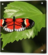 Butterfly On Large Leaf Acrylic Print