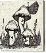 Butterfly On Mushrooms Acrylic Print