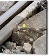 Butterfly On Railroad Tracks Acrylic Print
