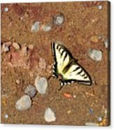 Butterfly On The Beach Acrylic Print
