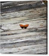 Butterfly On The Dock Acrylic Print
