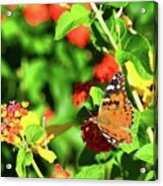 Butterfly On The Red Flower 2 Acrylic Print